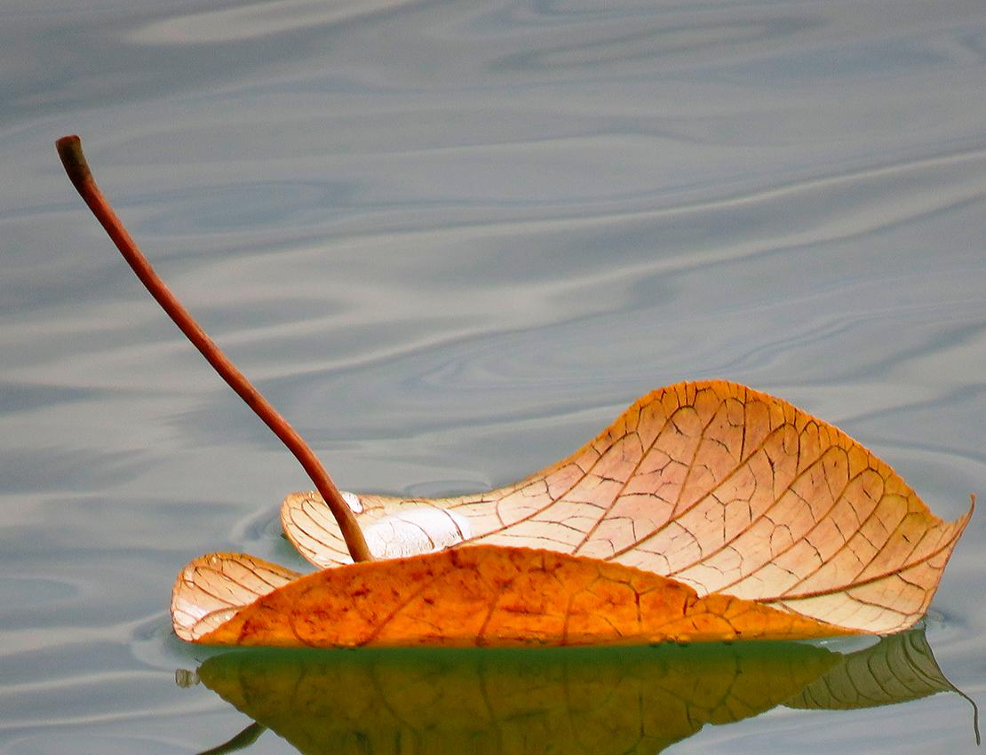 Blatt im Wasser Kopie