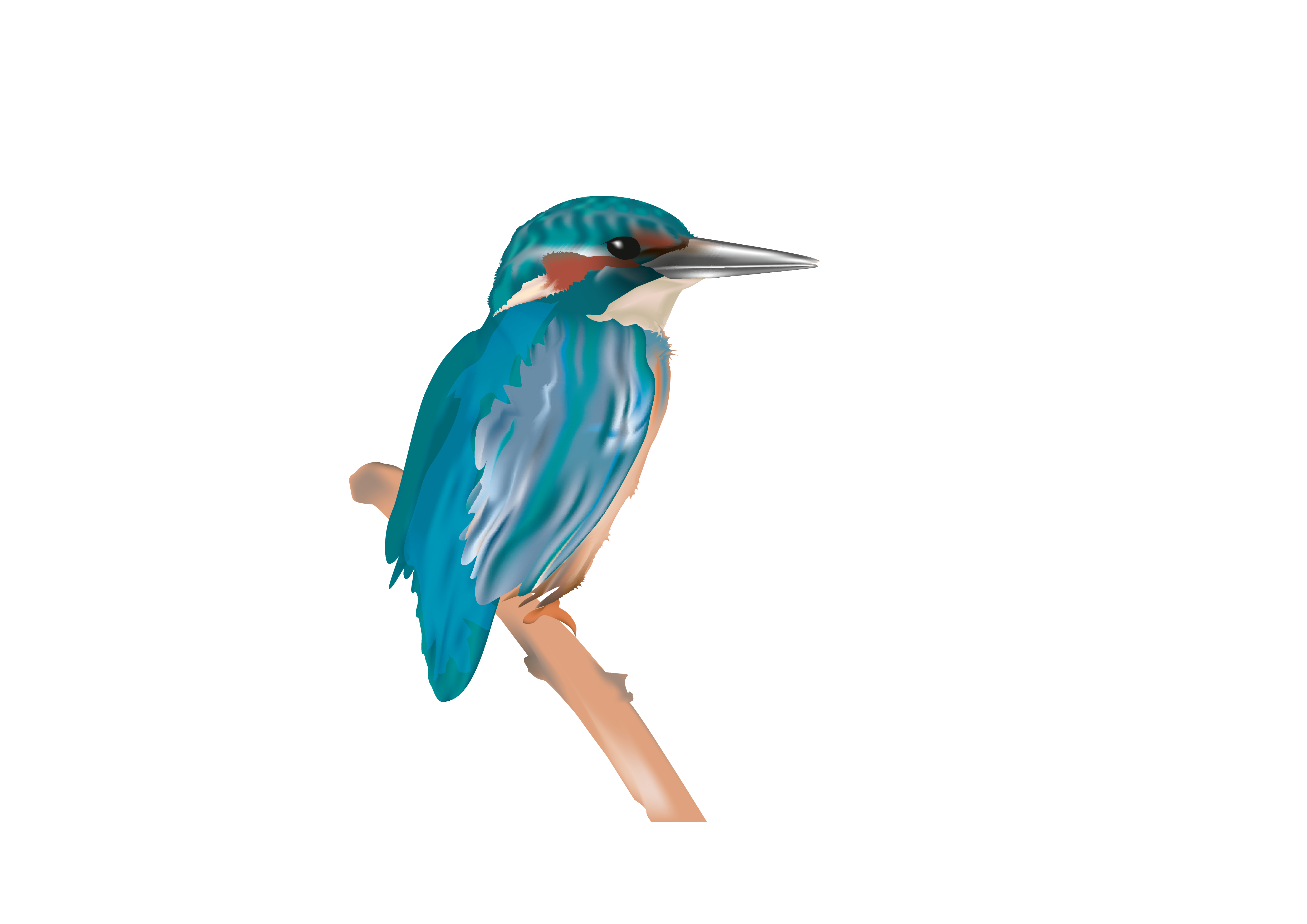 Eisvogel_Zeichenfläche 1
